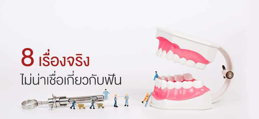 ฟันของมนุษย์ อวัยวะเล็กๆ